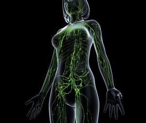 Anatomy of female lymphatic system in black